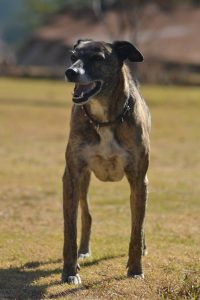 Pet friendly Drakensberg