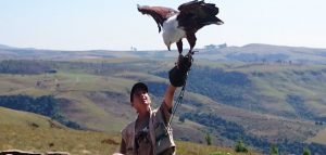 Drakensberg birding - Falcon Ridge bird of prey show